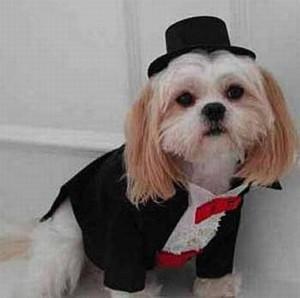 cane vestito sera