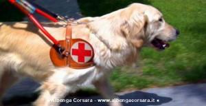 Igor - Labrador Retriever cane guida per non vedenti