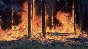Incendio bosco xG00