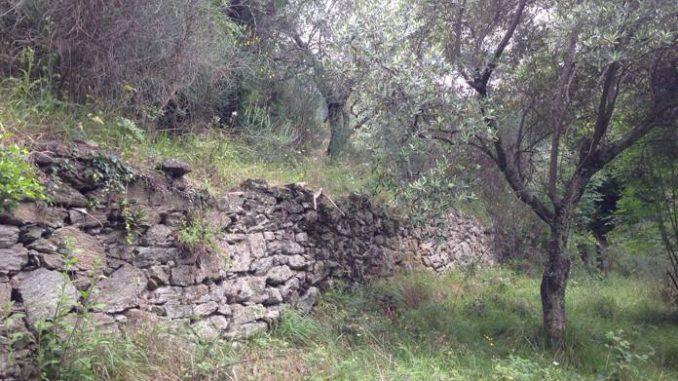 Un Censimento sui terrazzamenti in Liguria