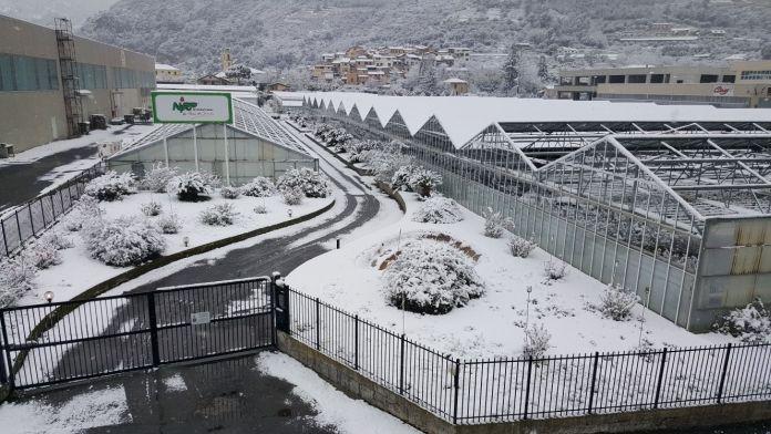 02 – Confagricoltura Liguria – Piiante gelate e innevate 2018