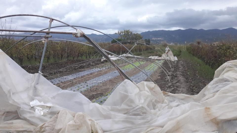 02 – I danni del maltempo alle strutture e alle coltivazioni (1) – Liguria