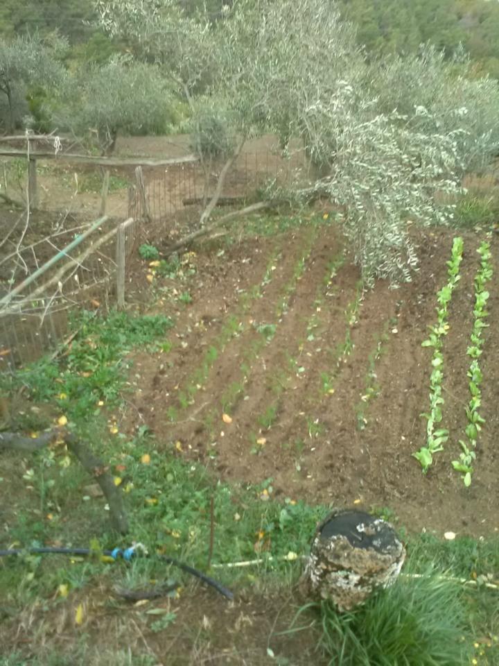 05 – I danni del maltempo alle strutture e alle coltivazioni (4) – Liguria