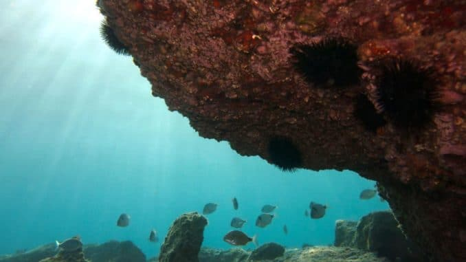 ambiente beachrock_Andrea Molinari