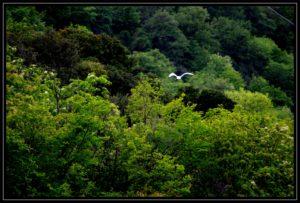 In ricognizione - White and Green