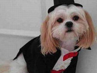 cane vestito sera e1484214050787