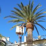 Loano Potatura palme 1
