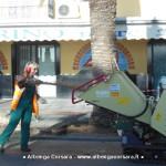 Loano Potatura palme2