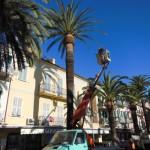 Loano Potatura palme3