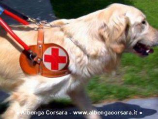 Igor Labrador Retriever cane guida per non vedenti e1470393581628