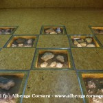 36 Ceriale Museo Paleontologico Slivio Lai