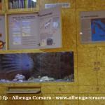 37 Ceriale Museo Paleontologico Slivio Lai