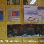 38 Ceriale Museo Paleontologico Slivio Lai