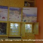 39 Ceriale Museo Paleontologico Slivio Lai
