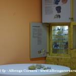 40 Ceriale Museo Paleontologico Slivio Lai