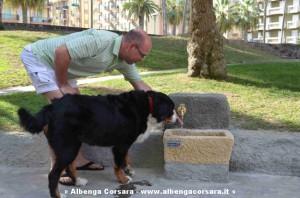 fontana cani_3 Andora