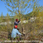 Andora taglio alberi Merula 02