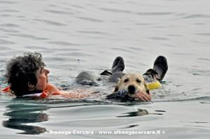 cani salvamento