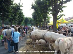 Fiera Bestiame 1