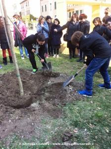 4 - Fai alberi marzo 169