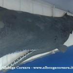 4 modello di balena