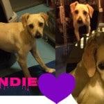 1 Cani da adottare