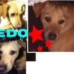 10 Cani da adottare