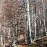 2 Alta Via Monti Liguri