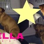4 Cani da adottare