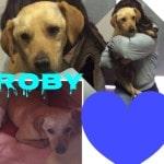 8 Cani da adottare