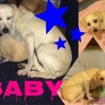 9 Cani da adottare