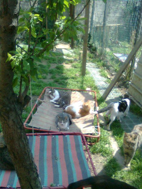 vita difficile per i gatti dell'oasi