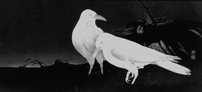 corvi jp