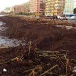 02 Borghetto spiagge