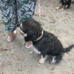 04 Spiaggia cani Vadino Albenga