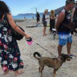 05 Spiaggia cani Vadino Albenga