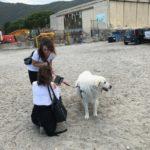 07 Spiaggia cani Vadino Albenga