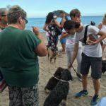 10 Spiaggia cani Vadino Albenga