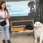 11 Spiaggia cani Vadino Albenga