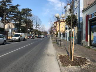 03 Nuovi Alberi Albenga