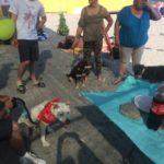 01 Spiaggia libera Amare Fido Albenga 2018