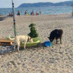 Spiaggia libera Albenga