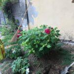 02 Manutenzione e cura verde pubblico Albenga 2018