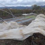 03 I danni del maltempo alle strutture e alle coltivazioni 2 Liguria
