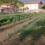 04 I danni del maltempo alle strutture e alle coltivazioni 3 Liguria