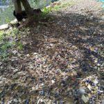 04 danni olivicoltura Liguria