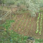 05 I danni del maltempo alle strutture e alle coltivazioni 4 Liguria