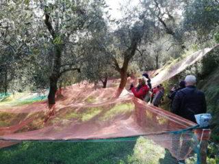 Passeggiata tra gli ulivi di Andora 02