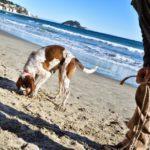 02 Italian Riviera Experience Alassio riviera e turismo