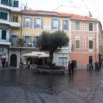02 Ulivo secolare a dimora in Piazza Massena a Loano